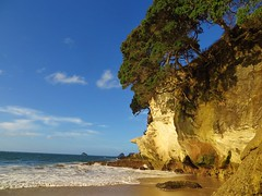 Cathedral Cove (9) (herbal tree) Tags: new travel june zealand backpacker 2015