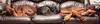 A three dog night? (the_sandman_454) Tags: portrait dog flash canine canoneos20d indirectflash canonefs1855mmf3556