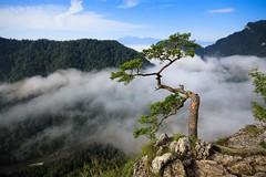 Pieniny Mountains / Pieniny (PolandMFA) Tags: park travel mountains poland polska national gorge gry attractions dunajec pieniny narodowy podre dunajca przeom pieniski atrakcje turystyczne