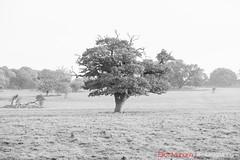 Hatfield_Forest-21 (Eldorino) Tags: park uk morning autumn trees nature forest sunrise landscape countryside nikon britain centre jour hatfield bishops stortford essex hertfordshire stanstead hatfieldforest