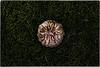 ... IMG_9607 (*melkor*) Tags: art halloween nature grass rain pumpkin geotagged moss october dof experiment naturallight conceptual melkor smallpumpkin trashbit