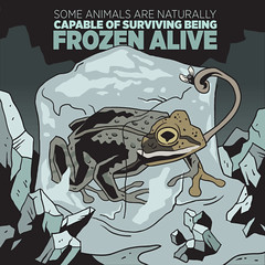 Ice way to pass the time (dv8sheepn) Tags: ice frozen science frog freeze illustrator biology vector zoology cryopreservation freezetolerance