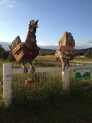 Steel chooks on a fence (spelio) Tags: auto sculpture art rural upload fence gate farming free valley canberra fowl range act chooks australiancapitalterritory majura