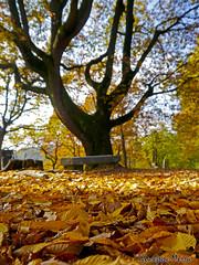 (Beppe_92) Tags: autumn torino piemonte autunno turin collina parcodellarimembranza autumninturin