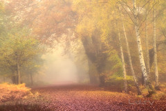 Autumnal Morning (Lesy83) Tags: uk autumn mist london fog forest eppingforest outdoor epping morningmist