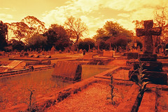 Cemetery (goodfella2459) Tags: new red film scale cemetery wales analog 35mm lens highlands nikon south southern 100 24mm af nikkor milf f4 horatio bowral caine c41 f28d redscale kaboattemulsion