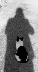 (Biagio Elia 76) Tags: blackandwhite ombra front retro io gatto biancoenero dietro spalle