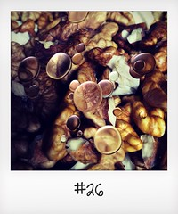 """#DailyPolaroid of 24-10-15 #26 • <a style=""""font-size:0.8em;"""" href=""""http://www.flickr.com/photos/47939785@N05/23341771342/"""" target=""""_blank"""">View on Flickr</a>"""