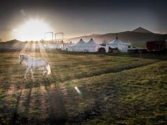 Cheval-Lumière (Clydomatic) Tags: montagne cheval soleil alsace soir château cirque blanc vosges hautkoenigsbourg chapiteau