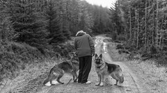Walkies (Tidyshow) Tags: trees dog pet white black forest countryside woods shepherd walk sony country tracks trail german 200 wife tamron 70 70200 f28 alsation a77ii ilca77m2