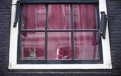 Who watches who (Arne Kuilman) Tags: fuji superia200 expiredfilm 2004 film scan nikon f100 50mm 50mmf14 analogue v600 dxcode 001293 fujicolor200 fujicolorsuperhq200 amsterdam analoog cat kat raam window