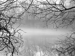 IMG_6057bw (Naturecamhd) Tags: canonpowershotsx50hs new york botanical garden newyorkbotanicalgarden nybg twinlakes fog mist nature blackandwhite weather