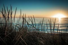 Supernova Sunset (Bobby Palosaari) Tags: lakemichigan michigan beach blue bright glow grass horizon lakeshore landscape sun sunlight sunrise sunset water