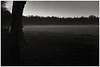 Fog at last light. Nettlebed, Oxfordshire. 29th December 2016 (Flat Twin) Tags: nettlebedoxfordshire rural rurallife leicammonochrom leicamm leica35mmsummicronasph leica35mmsummicronasphversion2 fog foggy mist lastlight lowlight