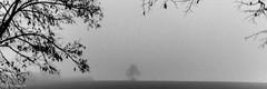 20161231Brouillard-11 (loflol) Tags: coteaux brouillard brume ancien grain
