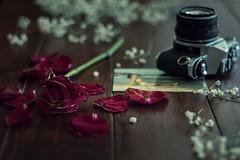 trozos de vida (deso rg) Tags: pentax smcpentax28mmf35 rosa past pasado recuerdos memories rose