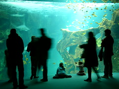 Aquarium la Rochelle (Vincent Buuron) Tags: leica digilux france aquarium rochelle d2 kids blue water contrast