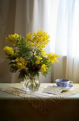 Still Life With Mimosa (vesna1962) Tags: stilllife plant flowers yellow mimosa postcard bluewhiteteacup vintage nostalgia