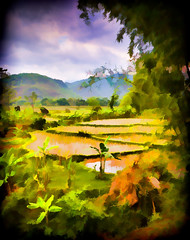 Mai Chau Valley paddy field Impression