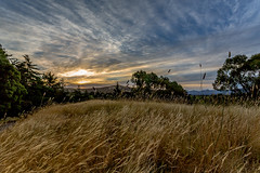 Sunset in Blenheim (Mikke.B) Tags: canon 5d mkiii travel newzealand new zealand photography blenheim wheat sunset evening 1740mm