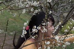 DSC_1209 (chenjn) Tags: d600 nikon 2470mm 妖怪村 柳家梅園 taiwan 信義鄉 梅花