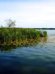 mecklenburg_28 (rhomboederrippel) Tags: rhomboederrippel fujifilm xe1 august 2016 germany mecklenburgvorpommern mecklenburg sternberg lake sun summer water shore reed