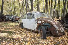 VW Graveyard (Jonnie Lynn Lace) Tags: abandoned america american graveyard car vw beetle volkswagen fall autumn leaves colorful colours orange red blue green yellow pa pennsylvania tree trees decay urbex woods nature light sun day sunlight exterior outside outdoors vehicle old rust madeofmetal cars rural derelict peelingpaint paintchips texture detail textures transport metal classic flickr digital forest