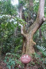 Palau Ubin, Singapore (attard_luke) Tags: singapore asia isolation palauubin rainforestisland