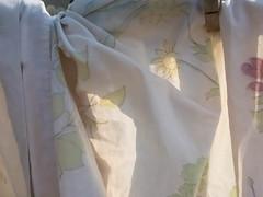 P8292920.jpg (mcreedonmcvean) Tags: clotheslines ourbackyard lastlight aroundthehouse 20150831