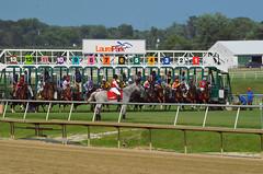 2015-07-26 (29) And they're off (JLeeFleenor) Tags: photos photography md laurelpark marylandracing marylandhorseracing racing racetrack gate jockey   jinete  dokej jocheu  jquei okej kilparatsastaja rennreiter fantino    jokey ngi horses thoroughbreds equine equestrian cheval cavalo cavallo cavall caballo pferd paard perd hevonen hest hestur cal kon konj beygir capall ceffyl cuddy yarraman faras alogo soos kuda uma pfeerd koin    hst     ko  maryland