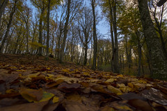 La Faggeta - Soriano nel Cimino ( VT ) (ISO.MANIA) Tags: foglie natura autunno viterbo monticimini