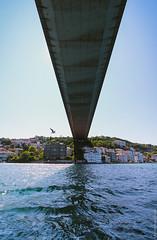 Птица под вторым Босфорским мостом