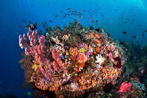 colorfull reef , Pantar island
