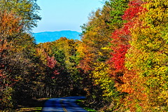 the parkway is calling-6974_3 (BillRhodesPhoto) Tags: autumn trees color fall nc highway nps asheville blueridgeparkway billrhodes mtpisgaharea