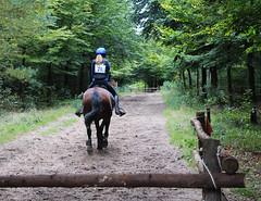 Doorn (Steenvoorde Leen - 1.8 ml views) Tags: horses horse jumping cross doorn pferde pferd reiten manege paard paarden springen 2015 utrechtseheuvelrug hindernis sgw arreche manegedentoom