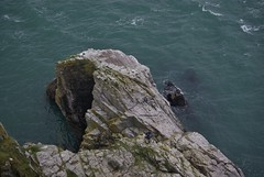 Fisherman climbing back up the rock face at Berry Head Brixham (Hoovering_crompton) Tags: cliff english rock fisherman berry riviera head brixham torbay
