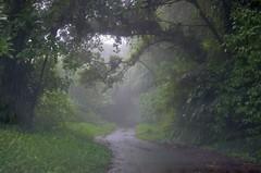 rain!!-forest (rosch2012) Tags: road fern tree wet rain forest island daylight rainforest day tag natur insel caribbean wald baum farn regen guadeloupe weg nass ferntree karibik regenwald baumfarn strase