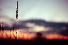 (Elena Protasova) Tags: autumn sunset film horizontal evening nikon nikonf3 domodedovo