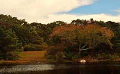 Brine's Pond (Thomas Kloc) Tags: trees pond marthasvineyard chappaquiddick capecodandislands