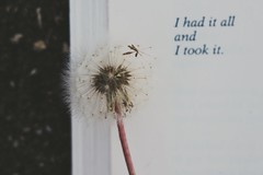 poetry #makeawish (mailuig) Tags: flower reading book poetry poem quote dandelion makeawish charlesbukowski flickrfriday