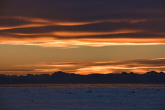 _DSC8724 (TC Yuen) Tags: glacier arctic greenland whales iceberg crusing floatingice polarregion greenlandeast