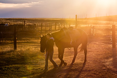Sun Drenched Morning (www.toddklassy.com) Tags: ranch morning autumn light horse orange woman sun sunlight cold west color girl silhouette yellow horizontal female backlight youth barn rural work fence walking person dawn one cool gate montana glare mt candid country working young documentary sunny teen fox western flare backlit cowgirl agriculture rancher leading saddle corral agricultural ranching quarterhorse hays blainecounty fortbelknap fortbelknapindianreservation