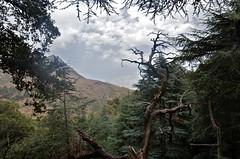 Tikjda (Tahia Hourria) Tags: sky cloud montagne algeria kabylie pin nora ciel nuages arbre montain fort algrie tahia chane cdre tikjda chne hourria aitaissa atassa