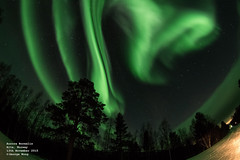 "Northern Lights ""love"" at Norway (looyaa) Tags: trees snow cold green norway timelapse pentax astro fisheye astrophotography aurora alta icy northernlights arcticcircle finnmark greenish k3 auroras 10mm gargiafjellstue"