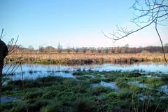 DSCF7351.tif (Ad Sebregts) Tags: tree reed river margriet
