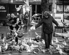 Inge Hoogendoorn (ingehoogendoorn) Tags: blackandwhite seagulls bird birds pigeon seagull gull pigeons gulls thenetherlands streetphotography vogels denhaag feedingthebirds blacknwhite thehague meeuw meeuwen vogel duiven duif straatfotografie vogelsvoeren