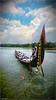 DSC_1775 (|| Nellickal Palliyodam ||) Tags: india race temple boat snake kerala pooja krishna aranmula avittam parthasarathy vallamkali parthan palliyodam nellickal jalothsavam