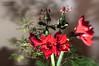 amaryllis (hirngespinste) Tags: amaryllis blume flower green grün lensbaby pflanze red rot copyright 2016 norbertkurzka nikond90 0mmf0