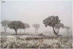 Zamora-niebla-01 (Neli Martin) Tags: zamora niebla hielo escarcha