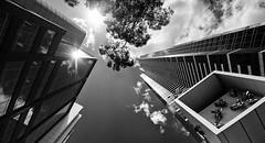 Eureka! (Tracey Whitefoot) Tags: 2016 tracey whitefoot melbourne australia eureka tower skyscraper looking up mono monochrome black white city